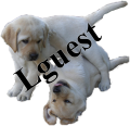 Puppies love lguest!
